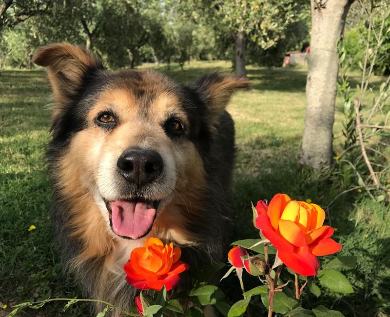 Agriturismo Toscana con cane
