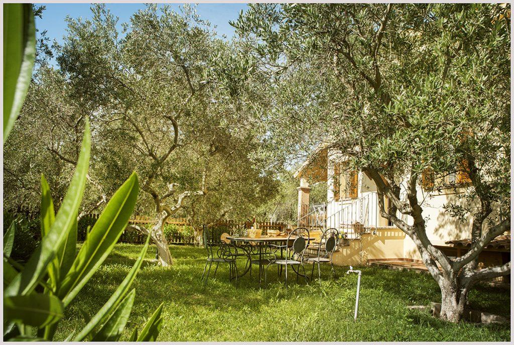eucalipto_giardino