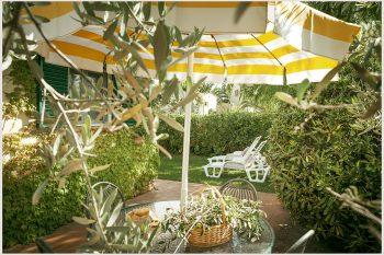 salice-giardino